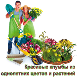 Создание и обслуживание красивых клумб для однолетних цветов и растений в Истре и Истринском районе