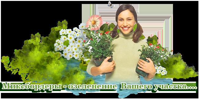 услуги по созданию клумб МИКСБОРДЕРОВ  в Истре и Истринском районе
