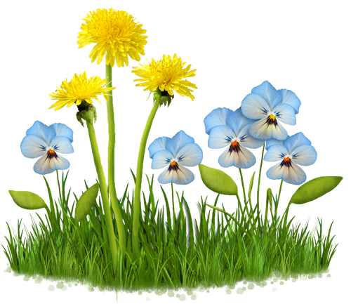 Уход за декоративной травой на приусадебных участках Истры и Истринского района