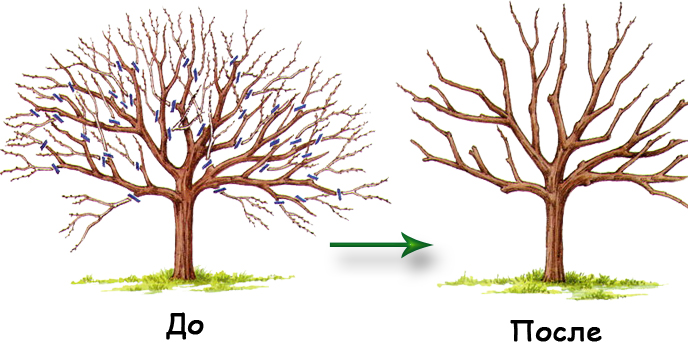Профессиональная  - сезонная обрезка садовых деревьев и кустарников в Истре и Истринском районе